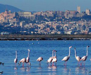 Gli indirizzi utili dell'università di Cagliari